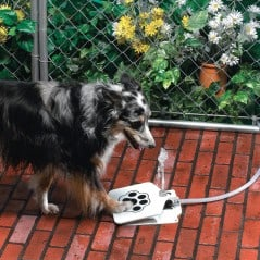 All it takes is one small step to satisfy your dog's quench.