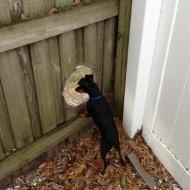 PetPeek Fence Window for Pets Black Dog