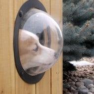 PetPeek Fence Window for Pets Curious Dog