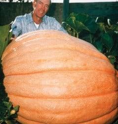 Pumpkin on steroids!