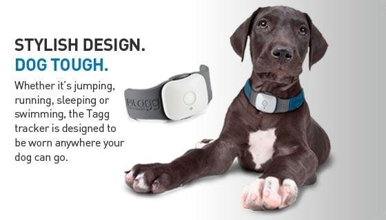 Tagg Gps Pet Tracker Dog And Cat Collar Noveltystreet