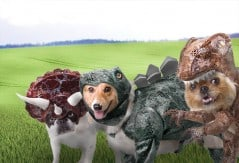 How would dogs look like during the age of dinosaurs?