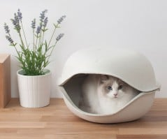 Cat in a shell.