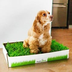 Real dogs use real grass.
