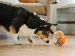 Fun way to increase your dog's IQ.