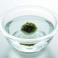 Eco Pochi Kokedama Moss Ball Pot Watering Instruction
