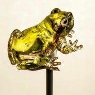 Ameshin Realistic Animal Lollipops Yellow Frog