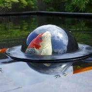 Velda Floating Fish Dome Koil Feeding