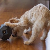 Up Dog Toys The Odin Buy for Small Dogs