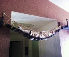 Bridge the gap for your cat.