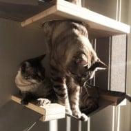 Catastrophicreations Cat Hammock Feeder Station Cat Hole