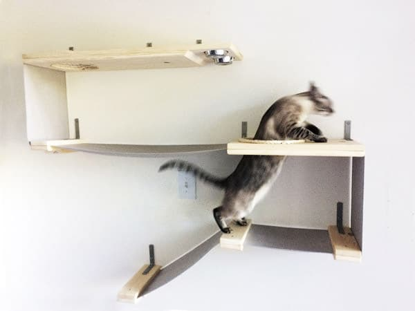 This will have your cats climbing the walls!