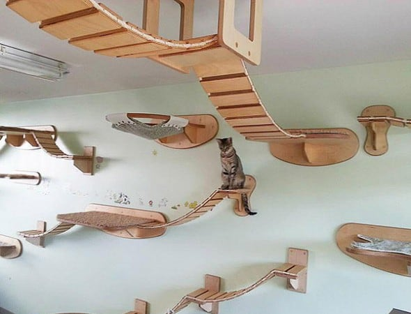 Build the ultimate cat playground.