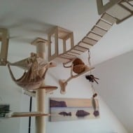 Goldtatze cat Climbing Furniture Pet Lover Dream