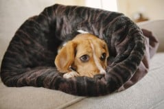 Give your pet four new reasons to snuggle his bed.
