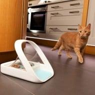 SureFeed Microchip Pet Feeder Buy for Cat