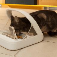 SureFeed Microchip Pet Feeder Tech Cat Bowl