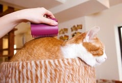 Massage and groom your cat at the same time.