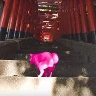 Squatting Dog Pink on Japanese Temple