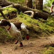 Ruffwear Summit Trex Boots Cool Stuff to Buy for Dogs