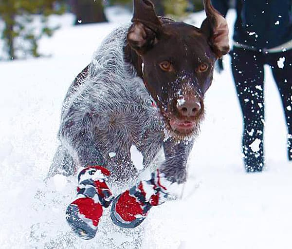 Active dogs need hardcore boots!