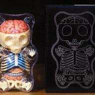 4D Master Gummi Bear Anatomy Model Buy Cool Gift for Kids
