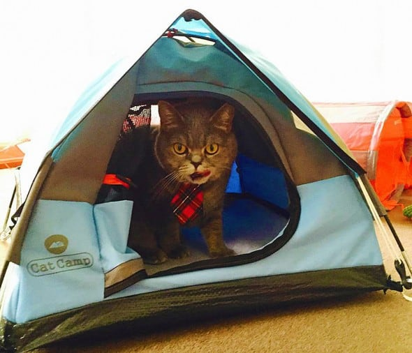 Let your cat taste the true outdoor experience.