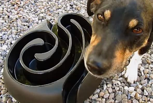 A maze-ing way slow your dogs eating time.