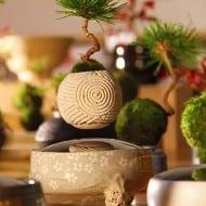 Hoshinchu Air Bonsai Artistic Home Decoration