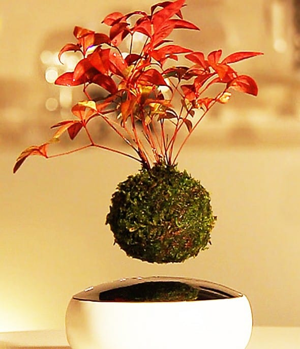 Floating bonsai is now a reality!