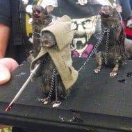 The Curious 13 The Walking Dead Michonne and friends taxidermy mice Cool TWD Collectible