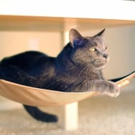Cat Crib Cat Hammock Feline Furniture to Buy