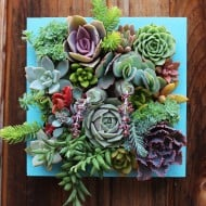 Succulent Wonderland Vertical Succulent Garden Buy Hanged Stuff