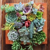 Succulent Wonderland Vertical Succulent Garden Cool Wall Design