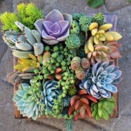 Succulent Wonderland Vertical Succulent Garden Cute Home Decoration