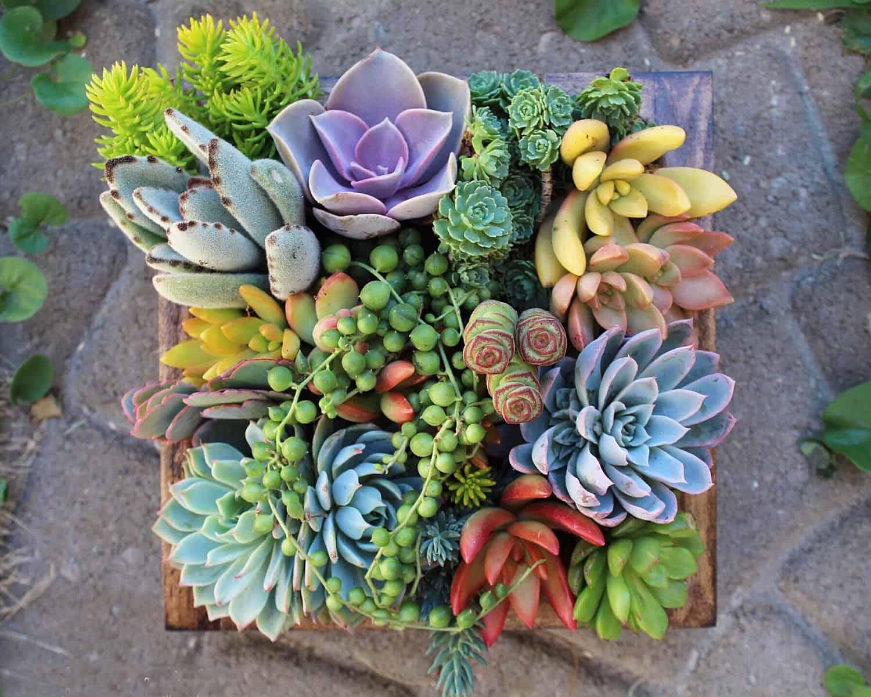 Bedroom Color Ideas For Couples Succulent Wonderland Vertical Succulent Garden Noveltystreet