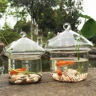 New Dream World Hanging Mushroomhouse Terrarium Cool Aquarium