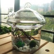 New Dream World Hanging Mushroomhouse Terrarium Good for Gardening