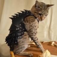 Savage Punk Cat Battle Armor Novelty Item