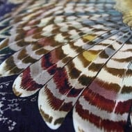 Shovava Owl Wings Scarf Good Design Clothing