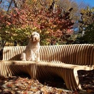 Straight Spirit Song Bench Amazing Outdoor Chair