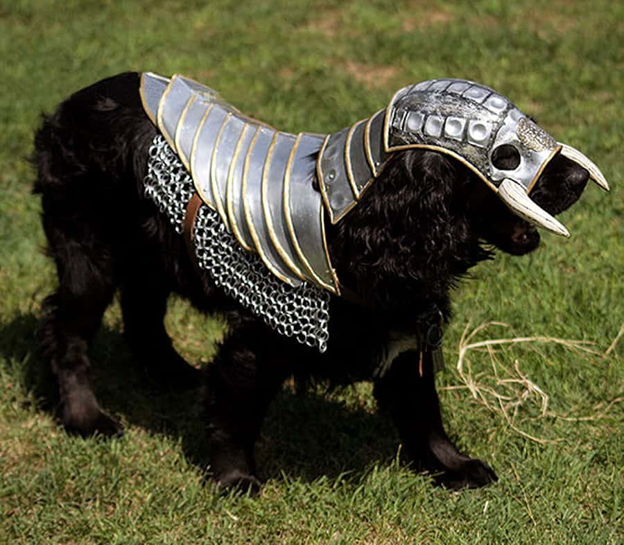 Ready your dog for medieval war! Or the renaissance fair.
