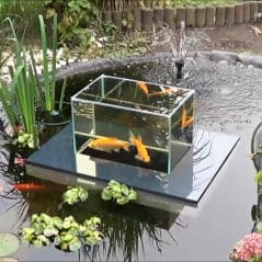 Goldfish swimming above the pond? Nothing koi about it.