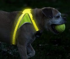 Turn your dog into a beacon of light.
