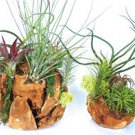 plntstr-living-air-plant-wood-spheres-exotic-flowering