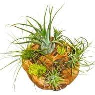 plntstr-living-air-plant-wood-spheres-pet-plants