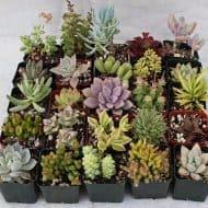 ye-olde-nerde-shoppe-super-mario-boo-buddy-planter-succulent-plant
