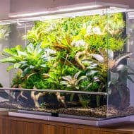 biopod-smart-microhabitat-home-decor