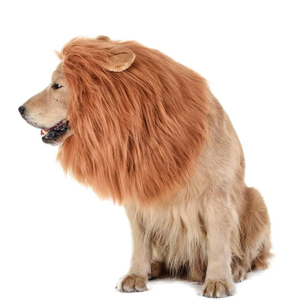 How to Make a Lion Costume
