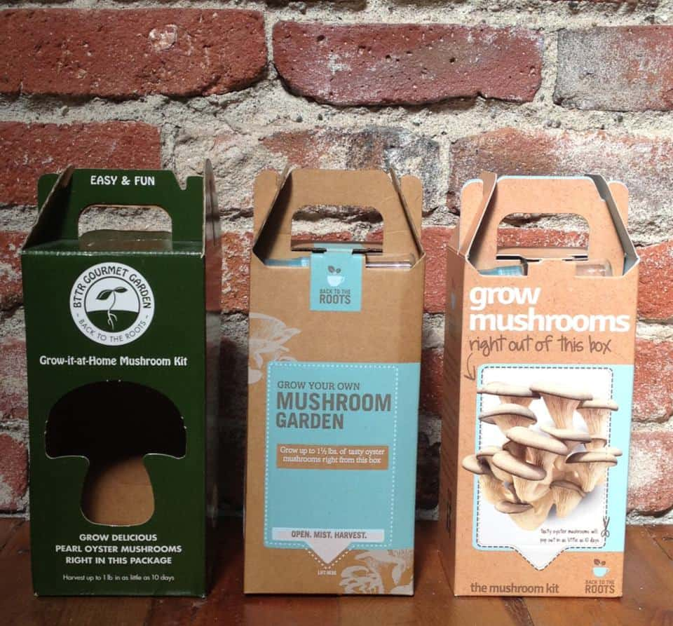 Back to the Roots Oyster Mushroom Kit DIY Gift Idea for Nature Lovers